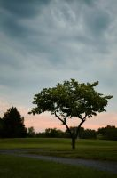 Tree with correction by rouellephotographie