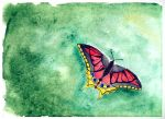 butterfly by Morti-Ray