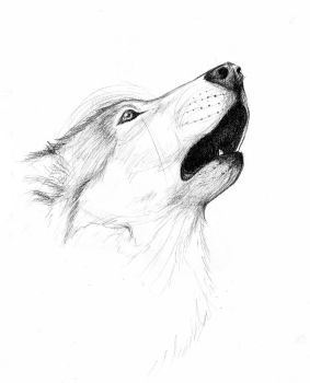 Wolf Sketch 01. by Mew-Suika