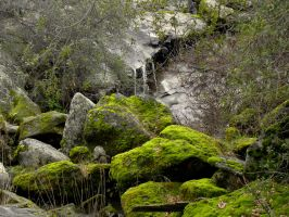 Forest Solace by jccowles