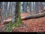 dry forest... by Iulian-dA-gallery