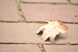 Leaf by AgnethaArt