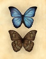 Morpho menelaus by Equal-Night