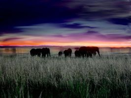 Silhouttes of Africa by rabbittheory