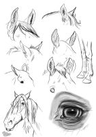 ear study : horse by blackseagull