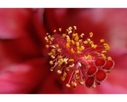 Stamen by nutmeg-42