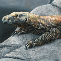 Komodo Dragon by DragonosX