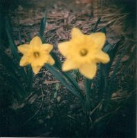 Spring Flowers by Lomo440