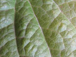 Leaf macro by TCJstock