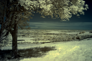 Infrared landscape by bmh1