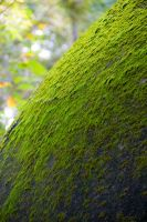Mossy Pagoda by SuperPope