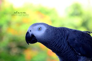 parrot by alessa93