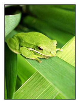 .frog by Le-Voyageur