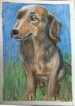 ACEO - Dog by sweetpie2