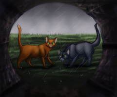 Searching WindClan by Aira90