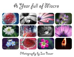 A Year full of Macro by little-billie