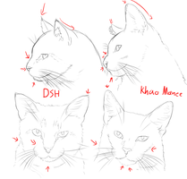 How to tell if you have a Khao Manee or a DSH by Zezkah