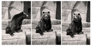 Bearly dressed by photozz