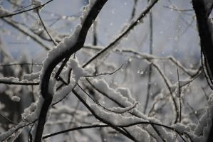 Falling Snow by louiecablouie