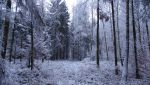 Snowy Forest 04 CD-STOCK by CD-STOCK
