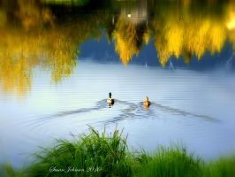 Ducks on a Pond by AlaskaGrl