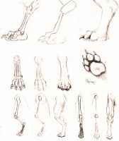 Anthro paw by FlamSlade