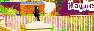Magpie by CaitlynEdwards91