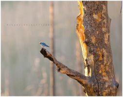 Morning Perch by michael-dalberti