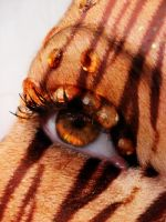 Tiger Eye by Holly6669666