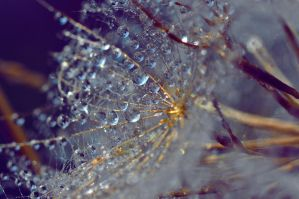 macro- drops by FiorOf