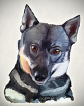 Rupert the Swedish Vallhund by TheBigDaveC
