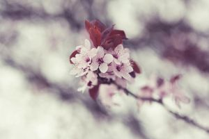 love blossom. by by-sannee