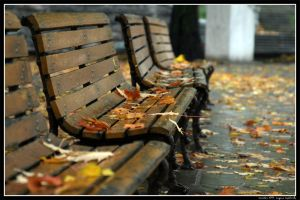 The Bench by Nefir