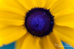 Yellow frame by giovannniii