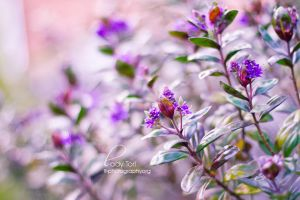 Day Forty-Three - Flowers by Lady-Tori