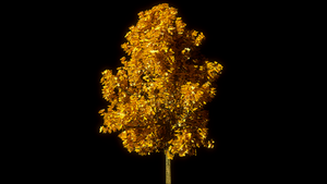 High Poly Tree - Autumn by Shroomworks