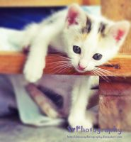 My little cat... by SimonaPhotography