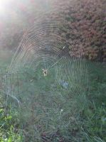Spider's Web (2) by damekage