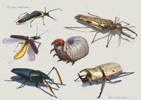 30 Minute Sketches - Week 2 Beetles by CaconymDesign