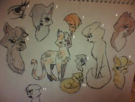 My RP Cats: Female by mistedshadows