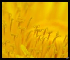 LADY  IN YELLOW by pebe1234