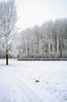 winterland 21 by priesteres-stock