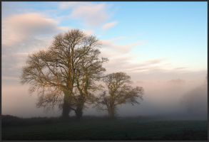Misty Morning by sags