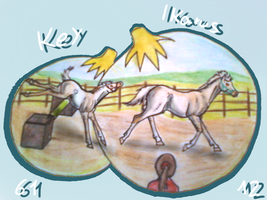 AQS Show Foal and Stallion Jumping -Key and Ike by GuardianOfJay