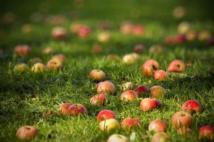autumn apples by Pkod