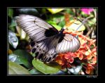 Tattered Wings by David-A-Wagner