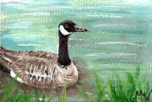Canadian Goose ACEO by xanadu125