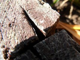 Wood by haileysthelimit