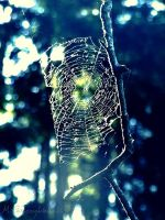 Web by Call-Me-Starlet