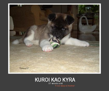 Kyra 7 weeks old... :aww: by Thez-Art